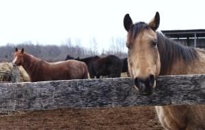 1. HorsePlay Niagara 1
