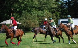 PHOTO_polo demonstration at Upper Canada Village - Horse Festival