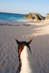 Riding along Bermuda's pink shores