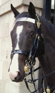 PHOTO queens calvery horse