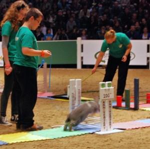 bunny jump 1