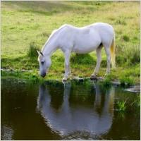 horse_animal_farm_218401