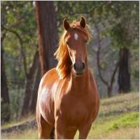 horse_stella_animal_217610