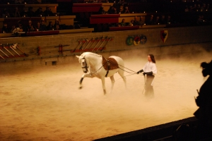 White Stallions of Medieval Times