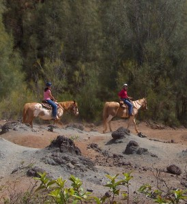Riding in Lanai through former Pineapple orchards
