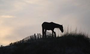 www.horsetrotting.net