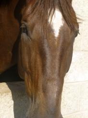 horsetrotting.net Telenko
