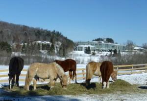 Deerhurst horses