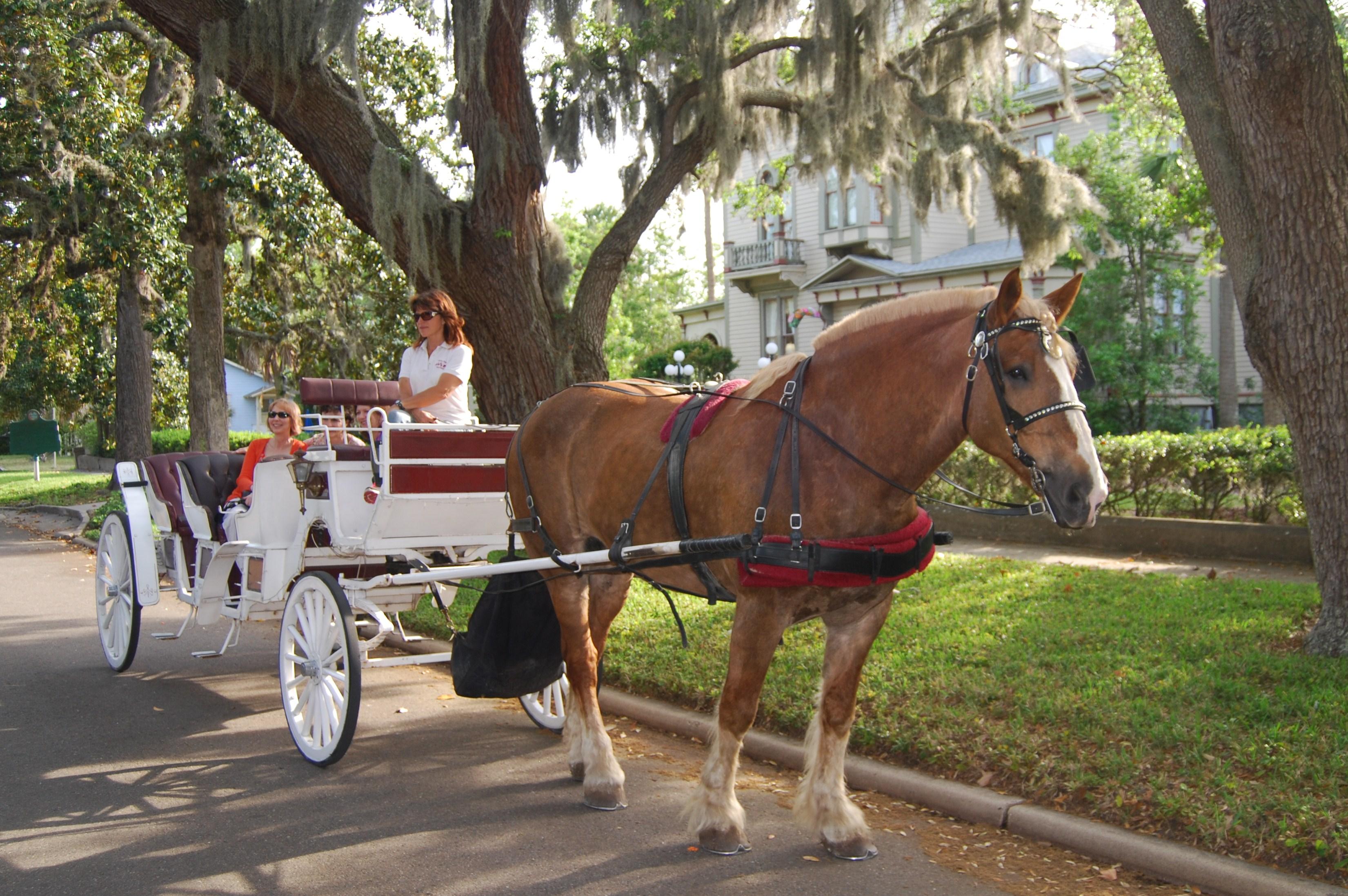 Amelia Island Carriage Tours