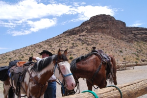 Horses Red Rock Mountain