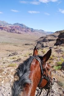 horse Las Vegas