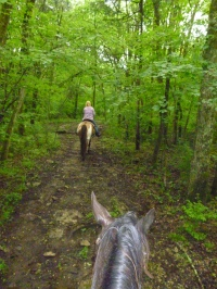 Riding in the woods at Juro Stables