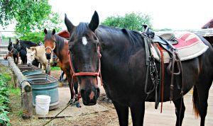 horse at Kurtz Corral, Wisconsin
