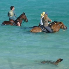 travel Horseback Riding at Long Bay Beach with Provo Ponies while travelling in Turks and Caicos