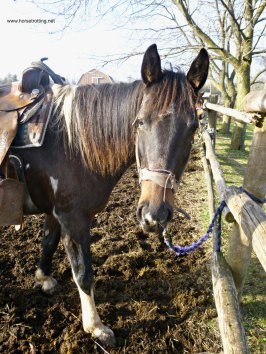 trail horse www.horsetrotting.net
