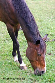 belle meade grazing horse
