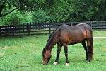 Belle Meade Plantation Horse