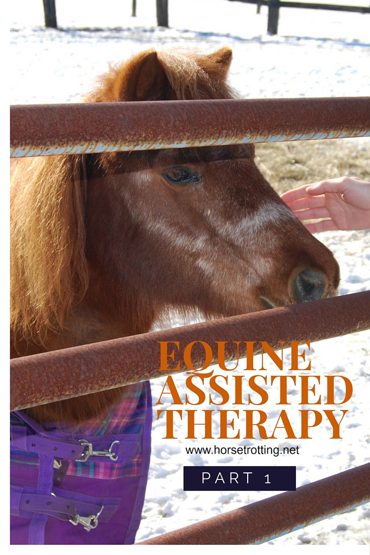 Equine assisted therapy horse