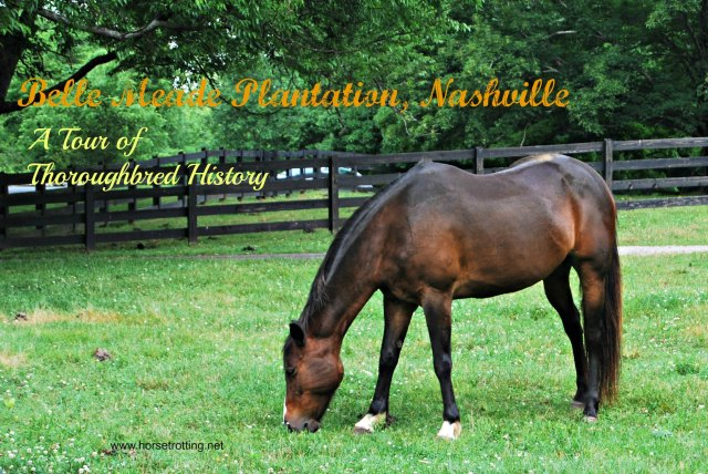 Belle Meade Plantation Horse Nashville