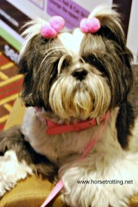 BlogPaws 2015 Dog