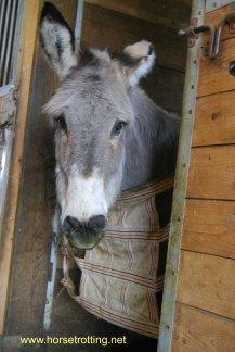 Jakek the Donkey WHR
