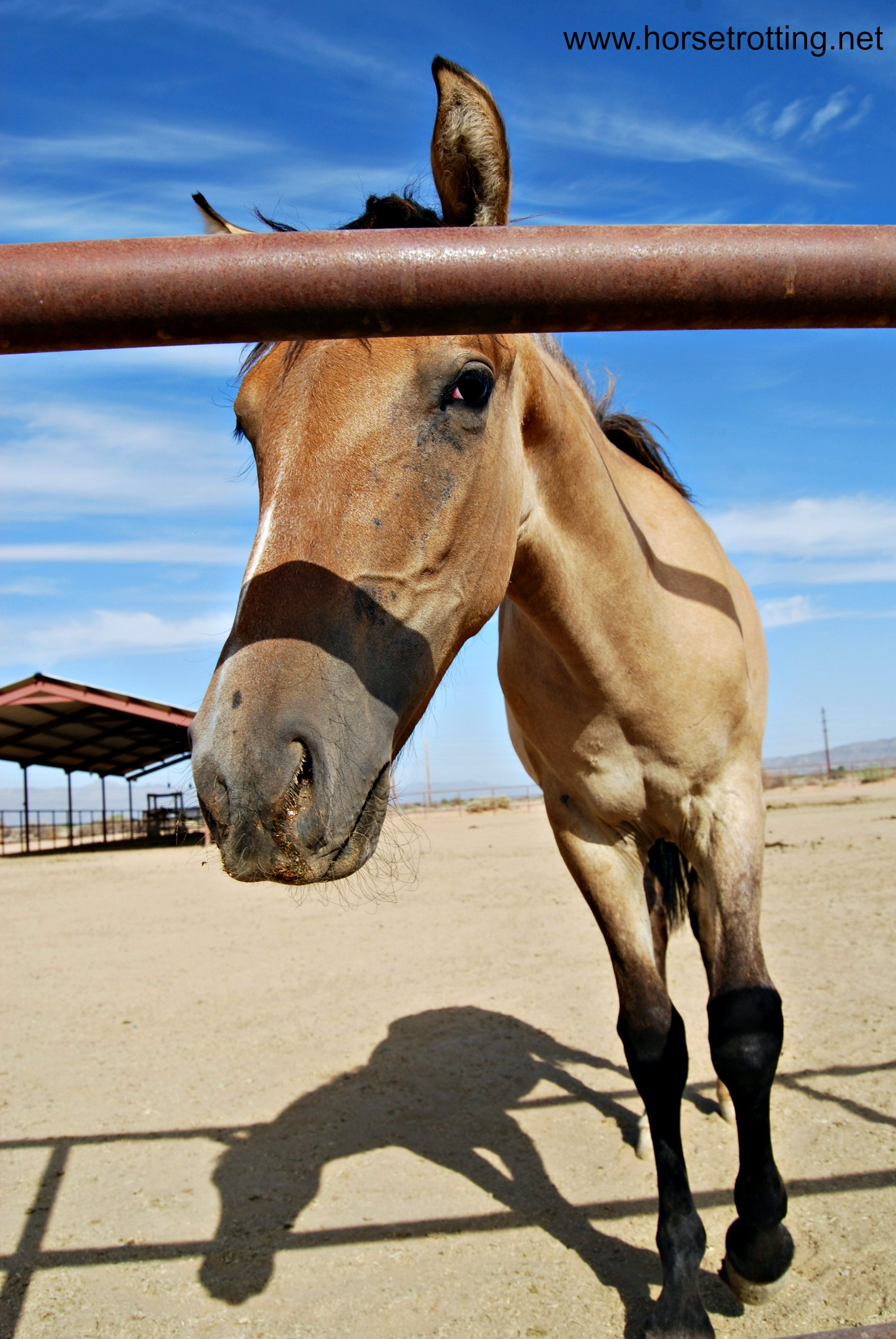 Foal at KOLI Equestrian Center, Arizona
