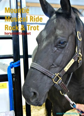 RCMP lead horse image