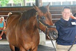 retired-race-horse-kentucky-horse-park