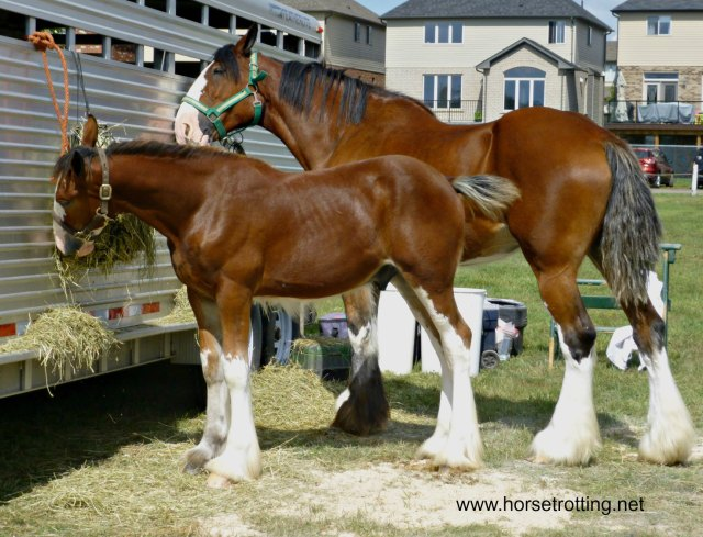 hitch-horse-mom-and-baby