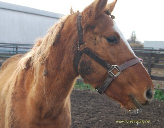 whr-horse-image