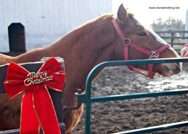 whr-horse-with-ribbon