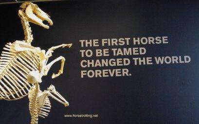International Horse Museum