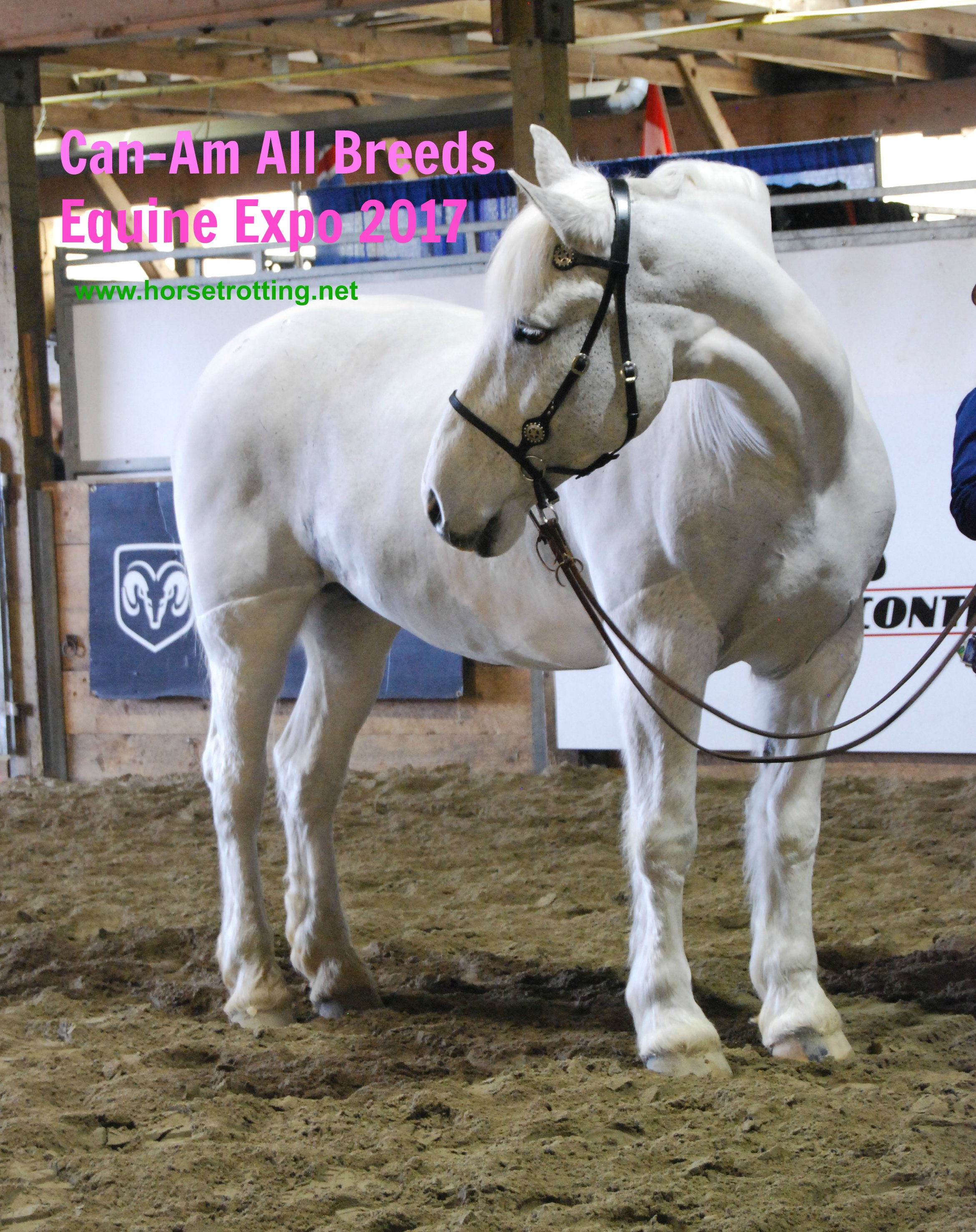 Can-Am All Breeds Equine Expo 2017 horse
