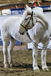 Horse at Can Am All Breeds Equine Expo 2017