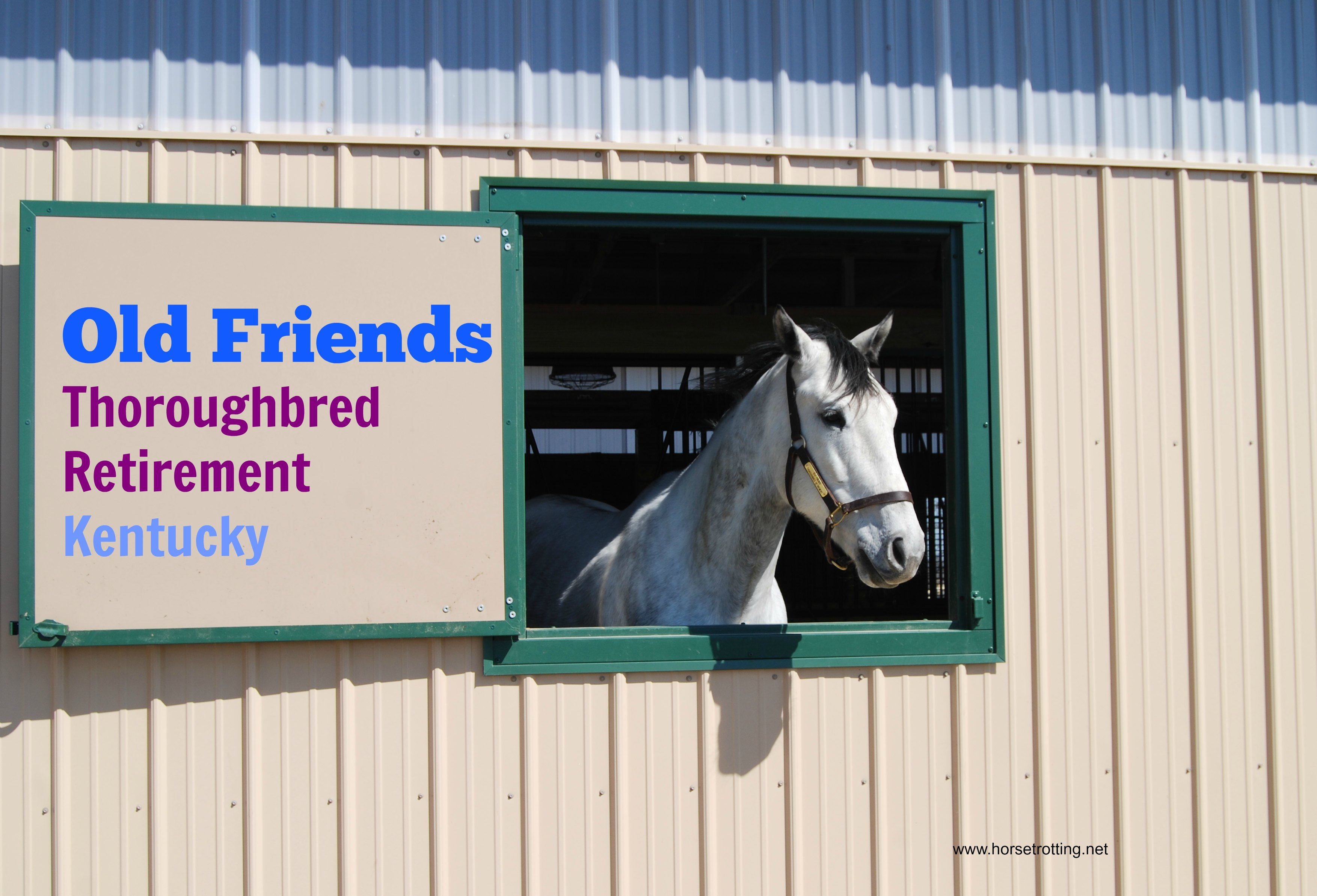 A Year of Heroes #6: Old Friends Thoroughbred Retirement, Lexington, KY