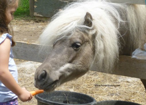 Pippin gets a carrot