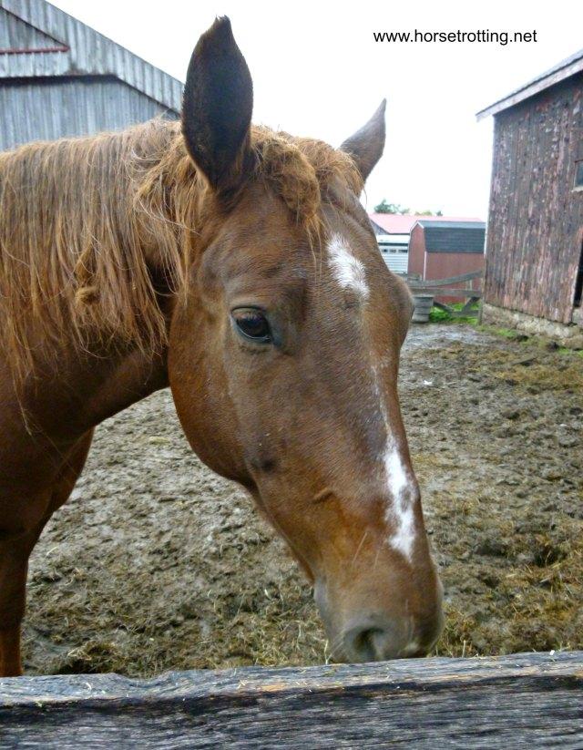 Horse at Conestoga River Horse Adventures, Waterloo, Ontario