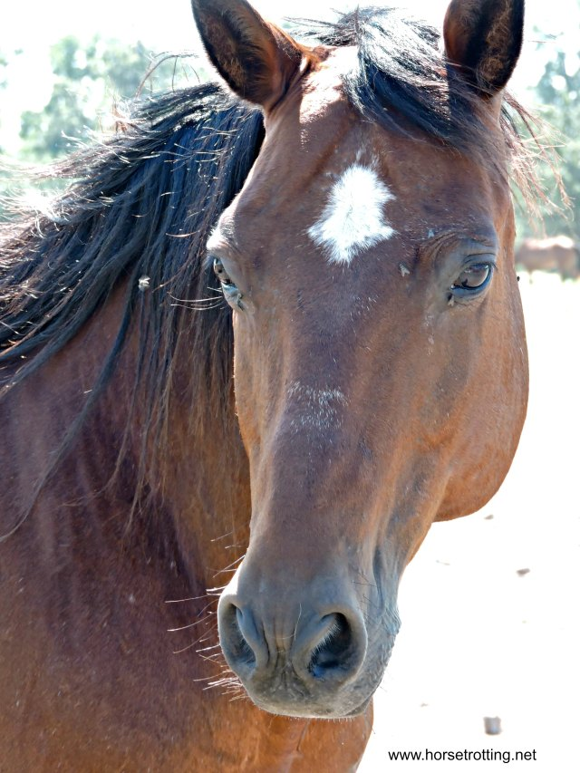 Whispering Hearts Horse Rescue
