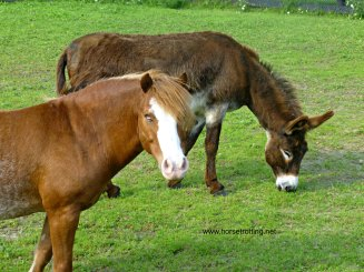 Blind horse and donkey at Dog Tales Dog Rescue and Horse Sanctuary