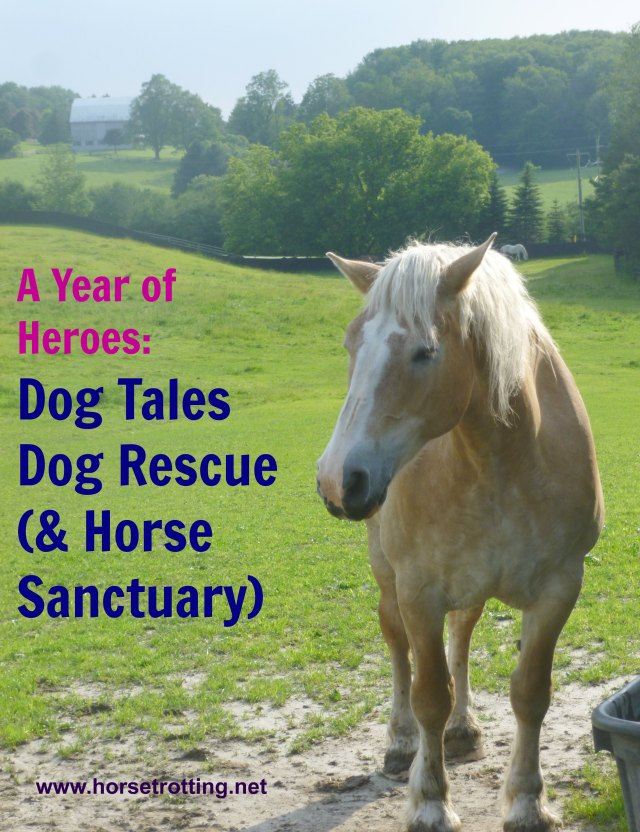 Horse at Dog Tales Dog Rescue and Horse Sanctuary