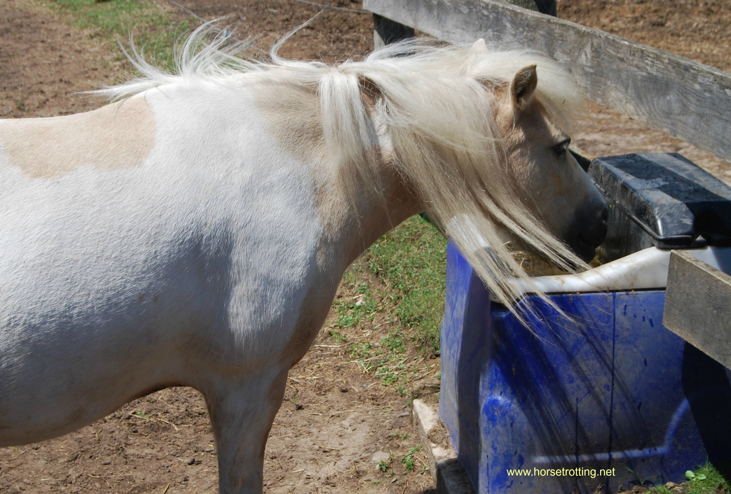Horse at Ralphy's Resort Animal Sanctuary