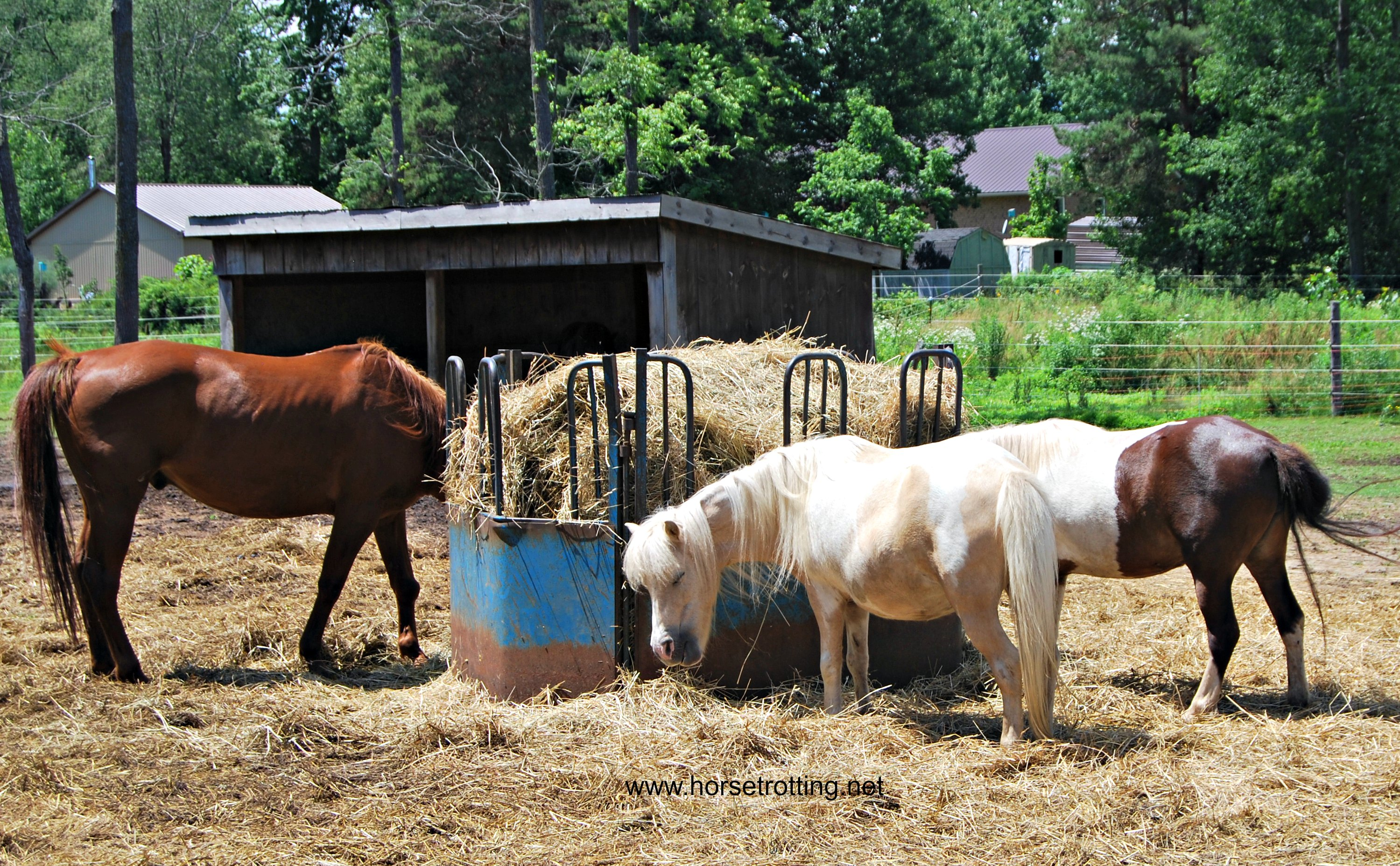 Horses at Ralphy's Resort Animal Sanctuary
