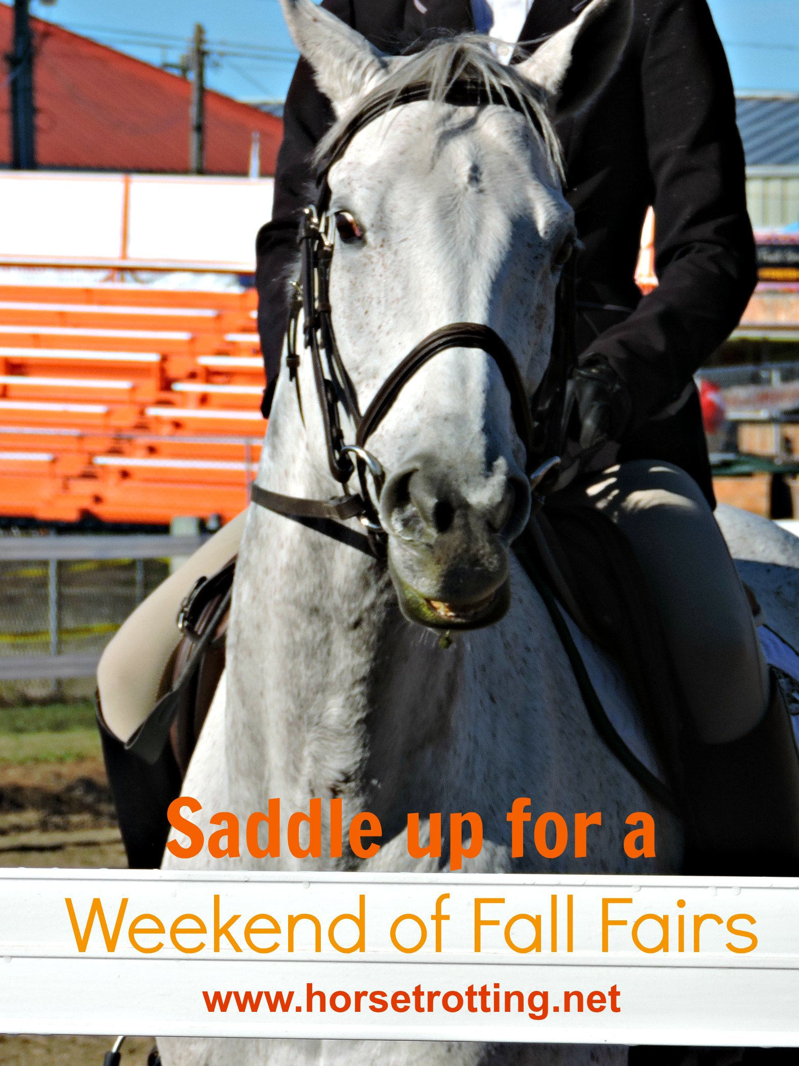 Loving the Fall Trifecta: Horses, Country Fairs, and more Horses
