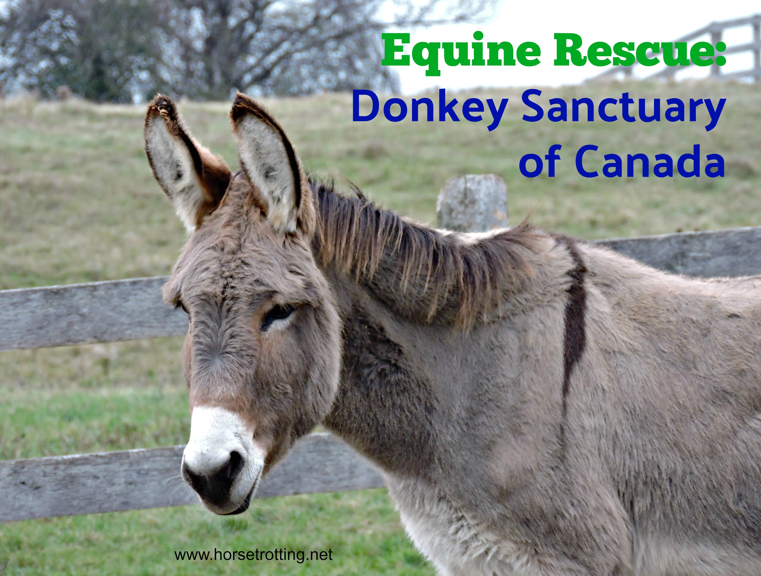 A Year of Heros #5: Donkey Sanctuary of Canada