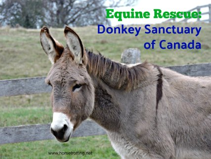 donkey at Donkey Sanctuary of Canada horsetrotting.net