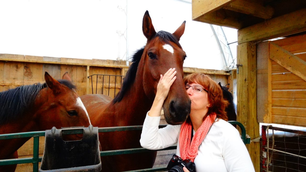kissing a horse on horsetrotting.net