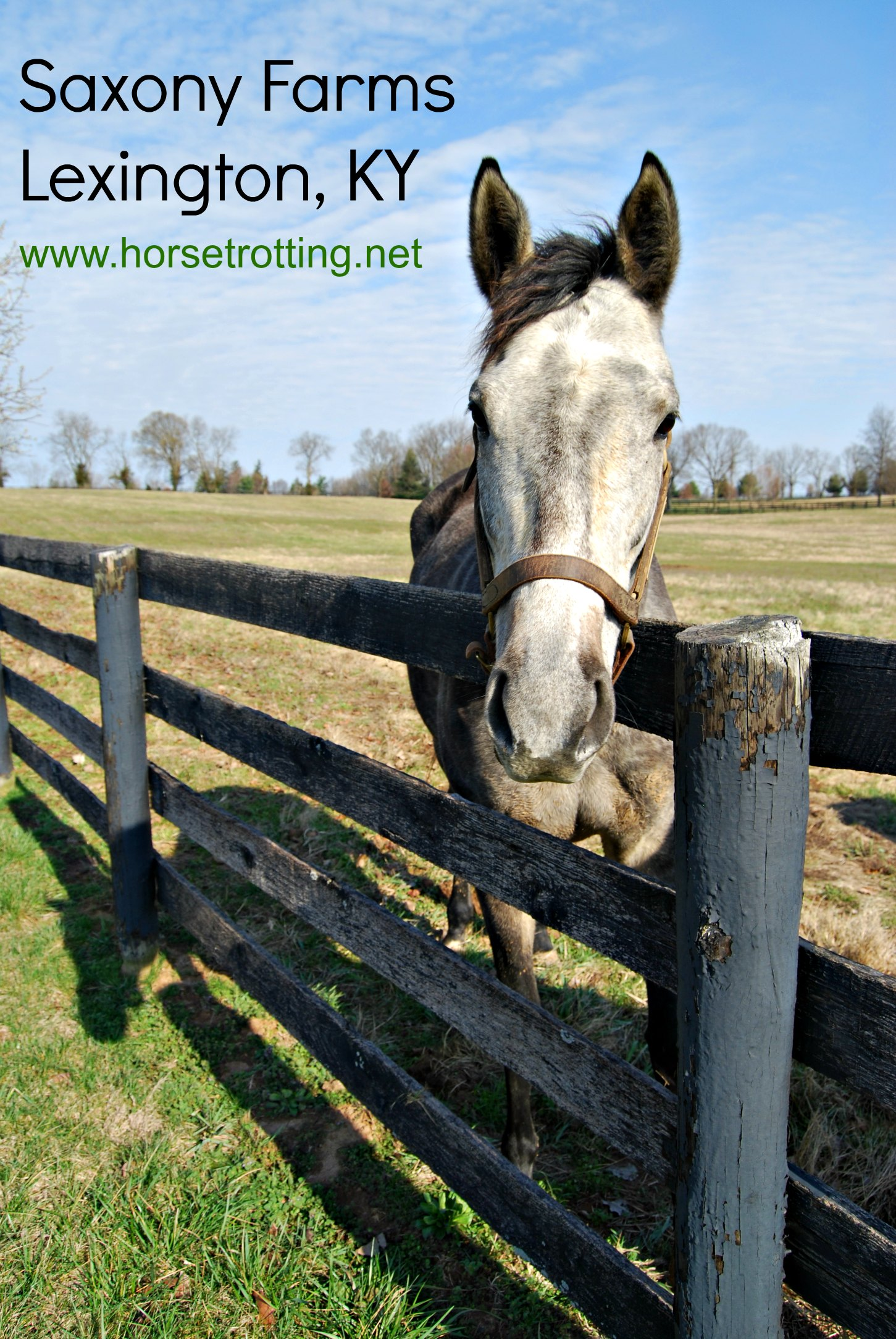 thoroughbred horses in a paddock at Saxony Farms, Lexington, Kentucky