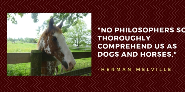 dogs and horses quote