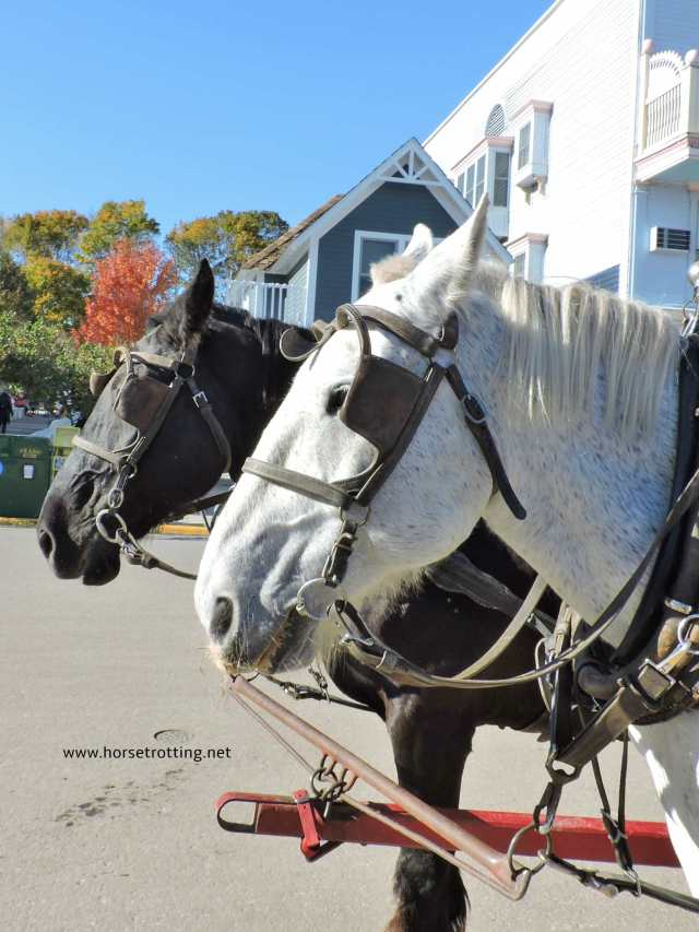 carriage horses of Mackinac Island, Michigan www.horsetrotting.net