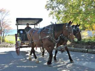 Carriage Horses Mackinac Island, Michigan www.horsetrotting.net